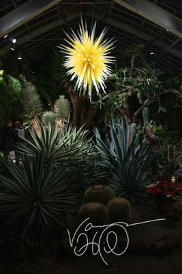 Cactus Room at Night
