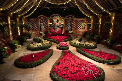 Poinsetta Garden