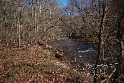 Bear Run Creek Feeding Savage River